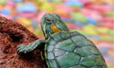 accelerate-be-the-tortoise-not-the-hare-127x75