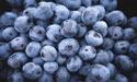 dried-or-fresh-blueberries-zenmoon